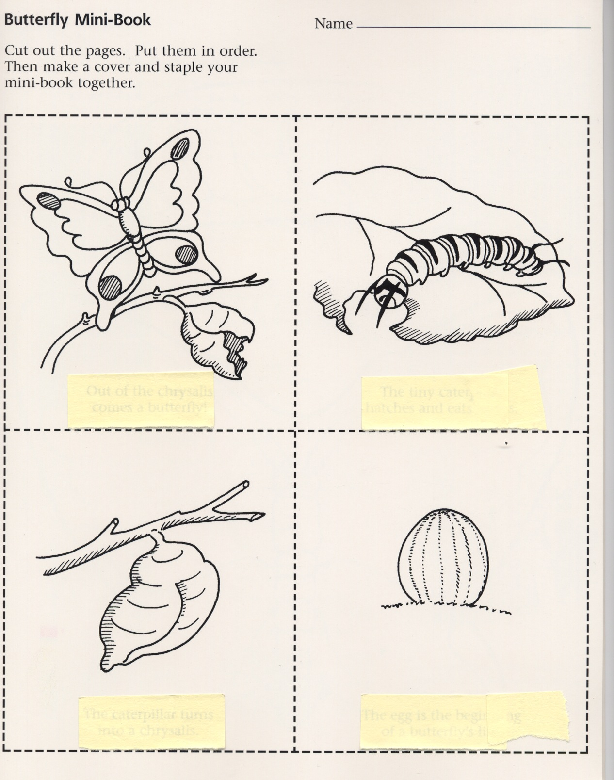 Coloring pages for life cycle of a butterfly - Students Have Become Acquainted With The Four Life Cycles Of The Butterfly At This Point They Will Be Asked To Demonstrate Their Understanding Of How There